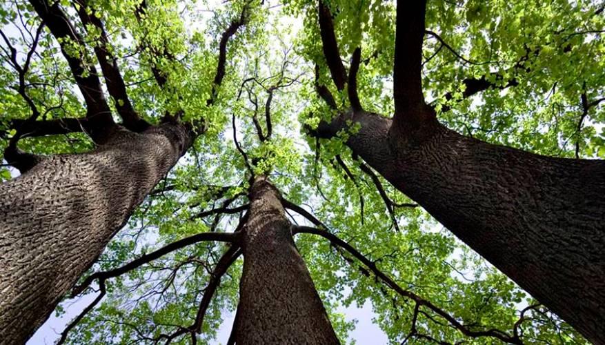29 de agosto el Día del árbol en la Argentina