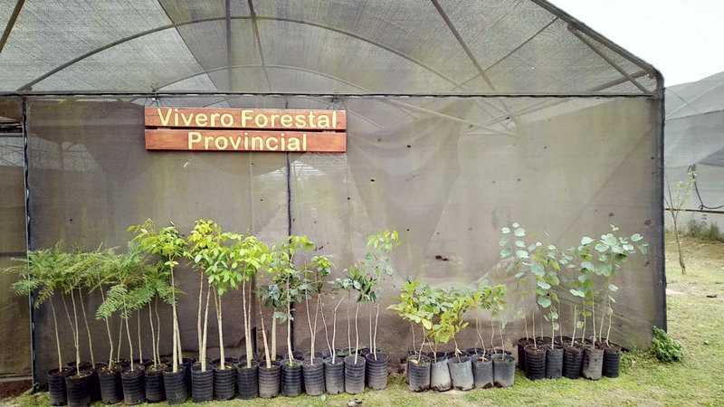 Se avanza con la entrega de ejemplares de árboles de la flora nativa
