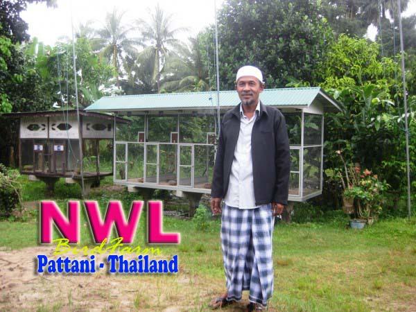 NWL bird farm perkutut pattani
