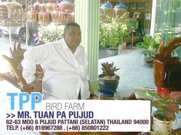 TPP bird farm perkutut pattani
