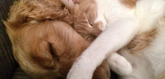 I kočka a pes mohou být kamarádi