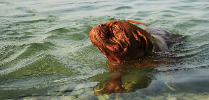 Se psem k moři