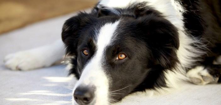 Slepý pes dokáže často mnohem víc, než si myslíme