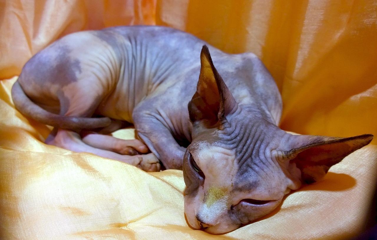 velká prohnutá kočička