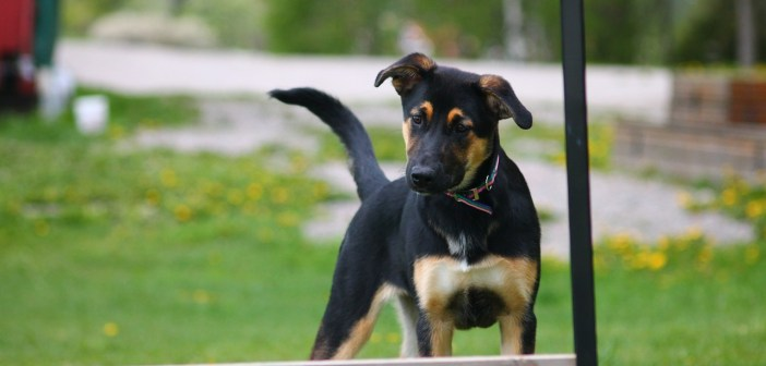 Je váš pes vhodný pro agility
