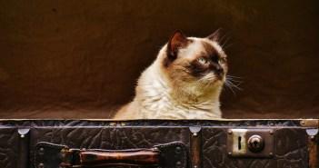 Stáří přijde na každou kočku