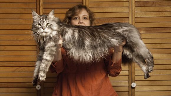 Velká a obrovská kočička