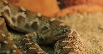 tři rady pro začínající chovatele hadů