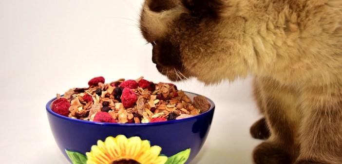 Čím krmit a nekrmit kočku? Lidskou stravu vynechejte