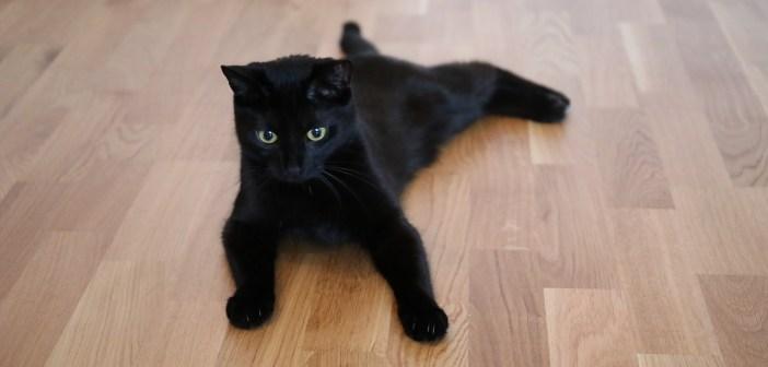 Co vše potřebujete koupit předtím, než si pořídíte kočku?