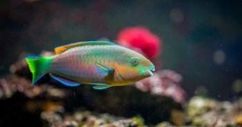 I akvarijní ryby mohou onemocnět. Pozor na plísňové choroby