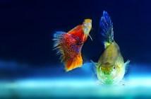 Jak předcházet onemocněním akvarijních ryb?