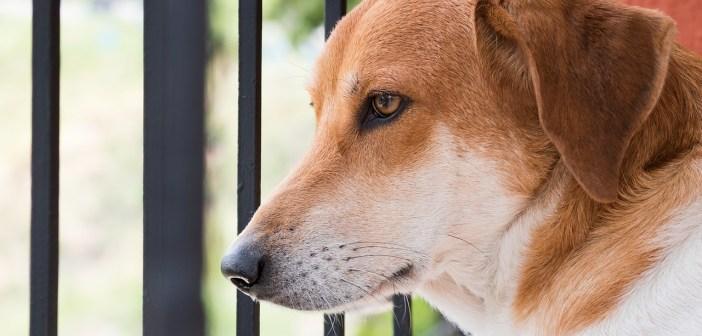 Víte, co psi nesnáší a čemu byste se tedy měli vyhýbat?