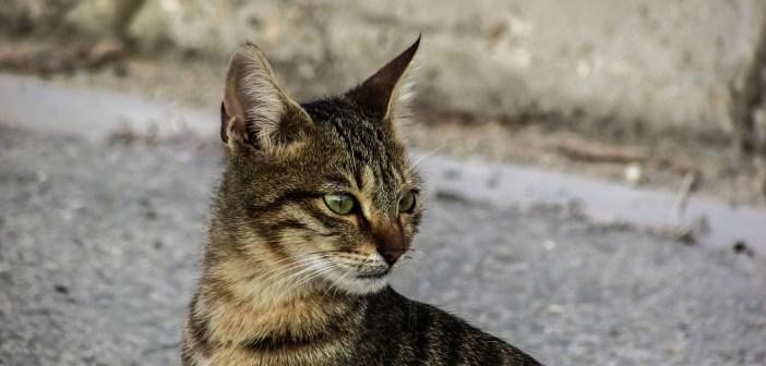 Imunita u koček: Jak ji zvýšit a jak předcházet nemocem?