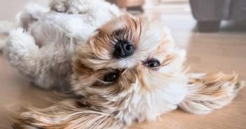 Jak ostříhat psa v pohodlí domova