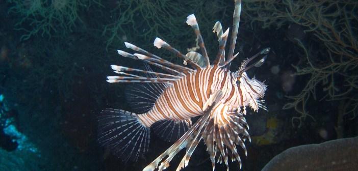 Perutýni jsou ozdoby našich akvárií
