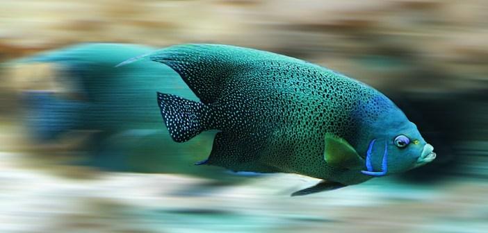 chov akvarijních rybiček pro a proti