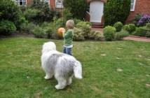 Co může za obezitu vašeho psa