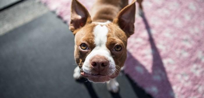 Jak se starat o psí uši
