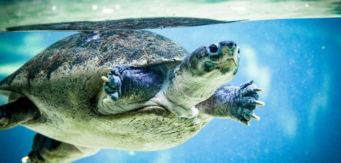 Tipy pro začínající chovatele vodních želv