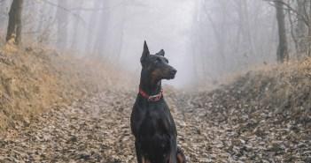 čtyři závažné příznaky stresu u psů