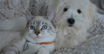 i psi vychází s kočkami