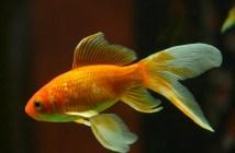 jaké rybky si vybrat, když začínáme s akváriem