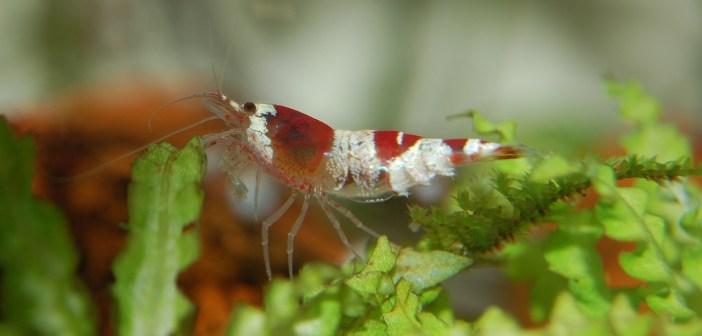Co dělat, abychom se vyhnuli zákalům a nečistotám v akváriu?