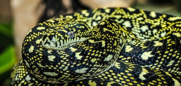 pět nejjedovatějších hadů světa
