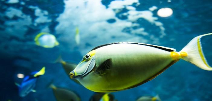 Jak se zbavit bílého zákalu v akváriu