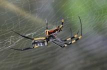 Kdy přináší pavouci smůlu a kdy štěstí aneb nejznámější pověry týkající se pavouků