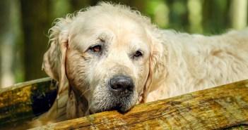 Starší psi a kočky mohou trpět onemocněním ledvin. Jak onemocnění poznat?