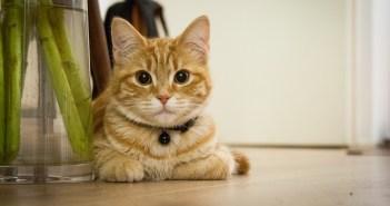 Jaké alergie trápí kočku nejčastěji?
