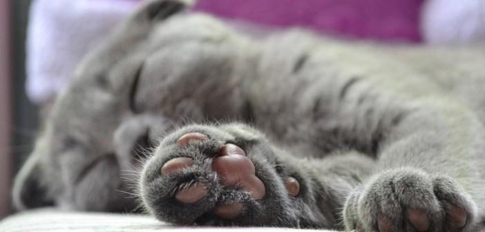 Když se u koček objeví plísňová onemocnění