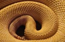 Trávicí problémy hadů, před nimiž se mějte na pozoru