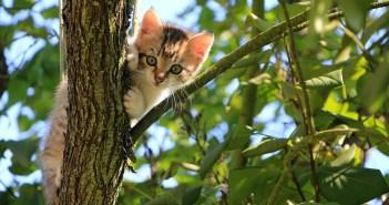 Zvláštní kočičí chování může poukazovat na celou řadu nemocí. Jakých symptomů si všímat?