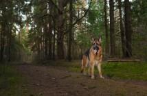 Jak poznáte, že má pes oslabené končetiny?