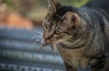 Tři a jeden poznatek o výživě koček