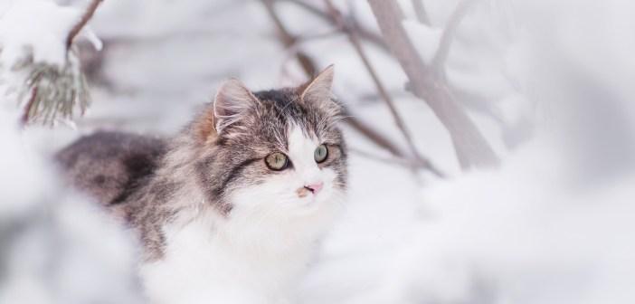 Co kočce hrozí v zimě?