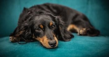 I psi mohou trpět anorexií. Jak se léčí?