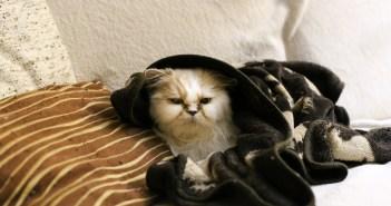 Jak usnadnit život kočkám v zimě?
