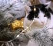 Vánoce s kočkami. Pozor na výzdobu i vánoční stromeček