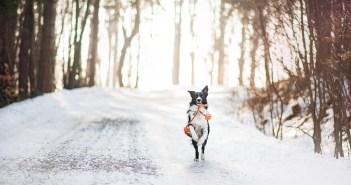 Co všechno ovlivňuje zdraví pejska v zimě?