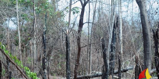 suasana taman nasional Tesso Nilo yang terbakar, gambar diambil dari dalam bus | infoPKU