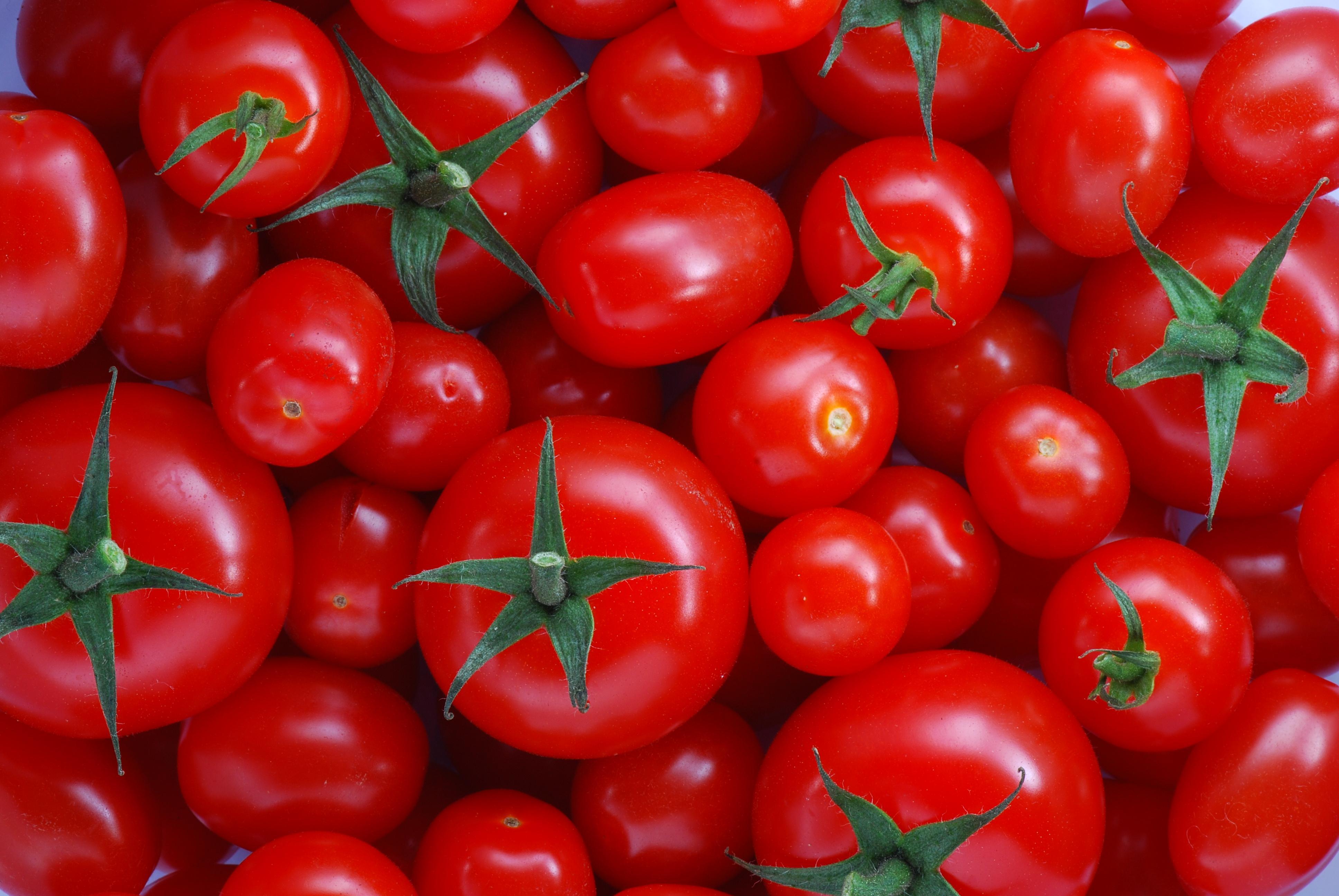 tomate foto buena, tomate de huerta