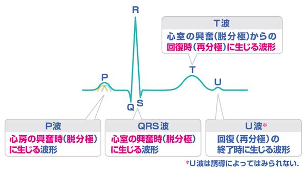 【第5回】電極のつけ方と基本波形 | INFORMA byメディックメディア