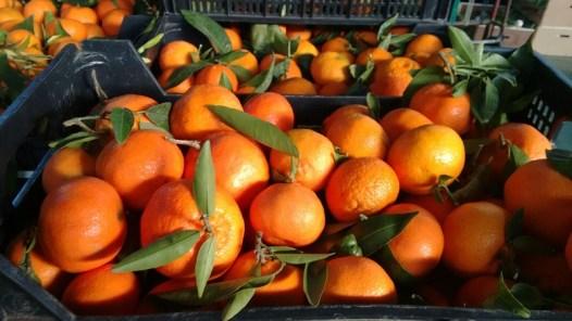mandarinas IMG-20151210-WA0036