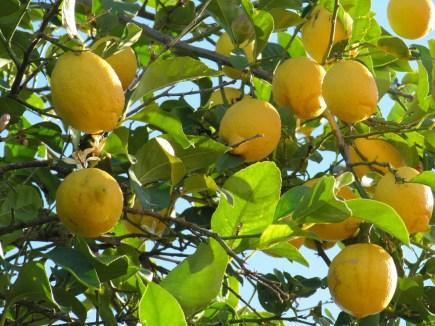 limonesIMG_5742