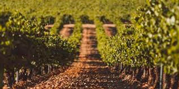 Castilla y León Salón Grandes Vinos de Madrid