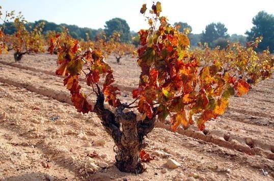 Murcia DOP Jumilla y sus vinos ecológicos